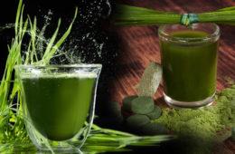 Sázíte na zelené zdraví z přírody? Přidejte do svého jídelníčku koktejl minerálů a vitaminů z přírodního zdroje – superpotravinu zelený ječmen.
