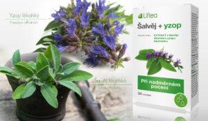 Šalvěj a yzop – bylinky na to, abychom se nezapotily