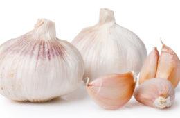 Bez česneku si nedokážeme naši kuchyni vůbec představit. A stejně, jako je česnek důležitý pro kuchařky, je velmi důležitou součástí mnohých léčiv.