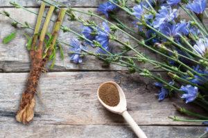 Pro farmaceutické účely se sbírá především kořen čekanky, méně pak kvetoucí nať a listy.