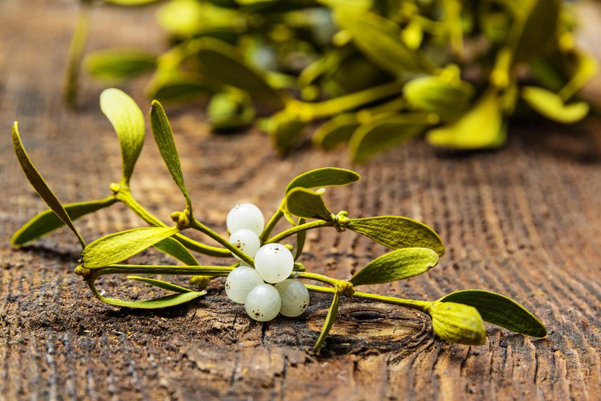 Jmelí bílé podle herbářů a tradiční přírodní medicíny snižuje krevní tlak, působí močopudně, tlumí bolesti hlavy či pocity návalů krve do hlavy (zejména v klimaktériu).