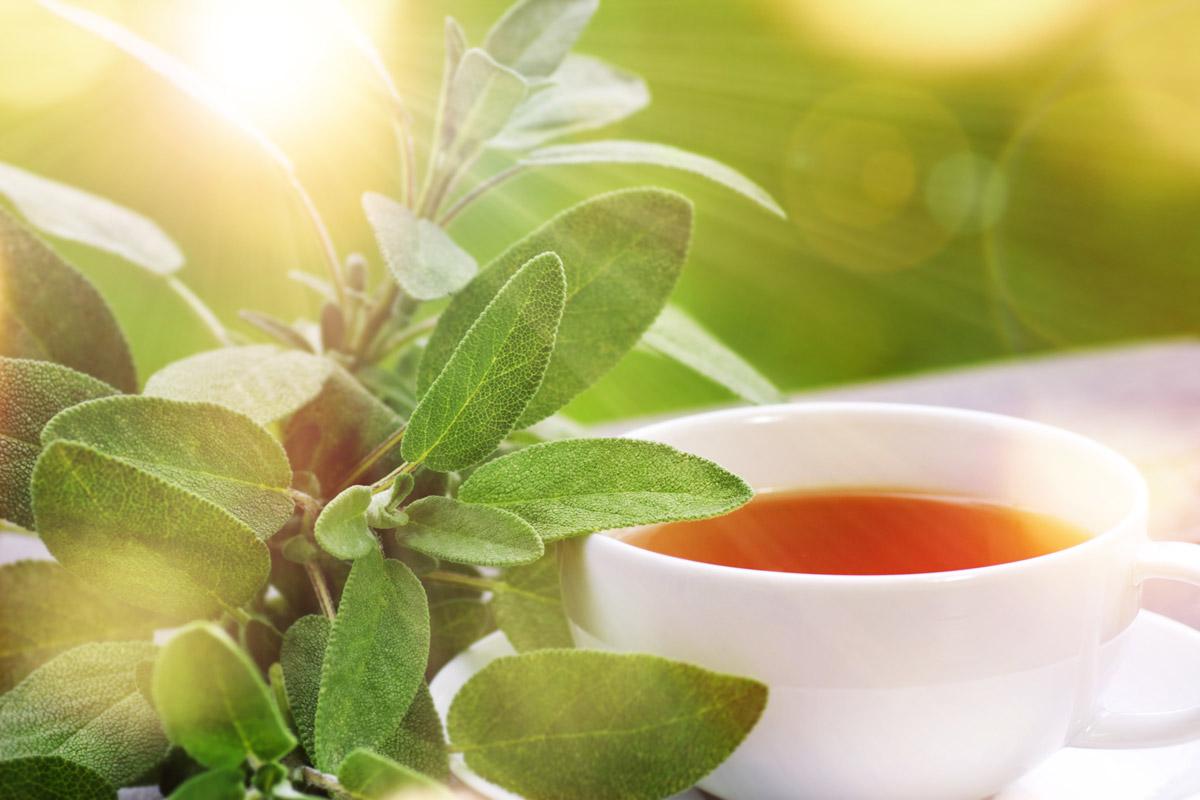 Čaj ze šalvěje zmírňuje nadměrné pocení, pomáhá při menstruačních problémech, odstraňuje obtíže při klimakteriu. Je vhodný také tehdy, pokud chceme zlepšit koncentraci a oddálit duševní vyčerpanost.