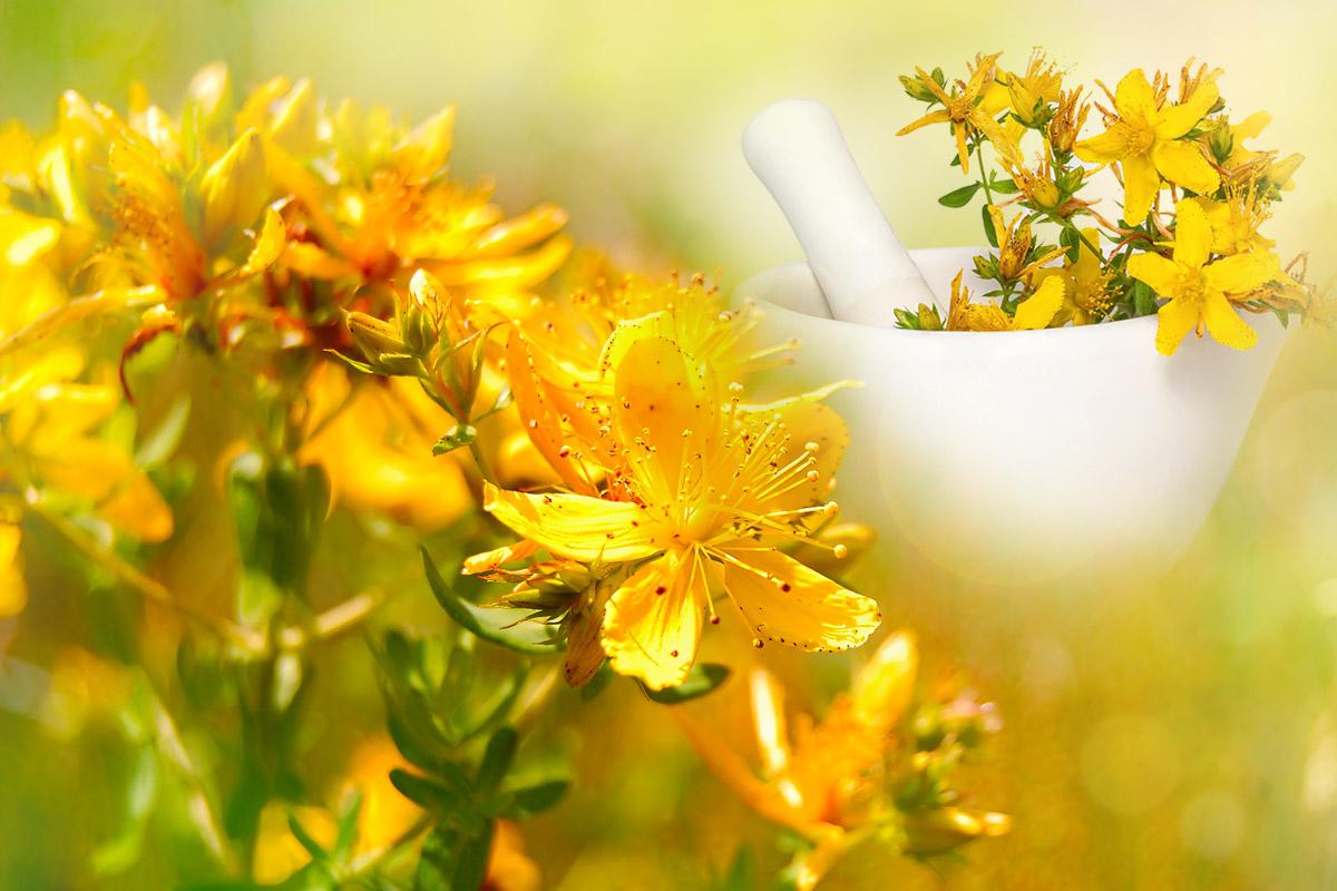 Nenápadná žlutá rostlinka, třezalka tečkovaná (lat. Hypericum perforatum), je 10–100 cm vysoká bylina z čeledi třezalkovitých (Hypericaceae).